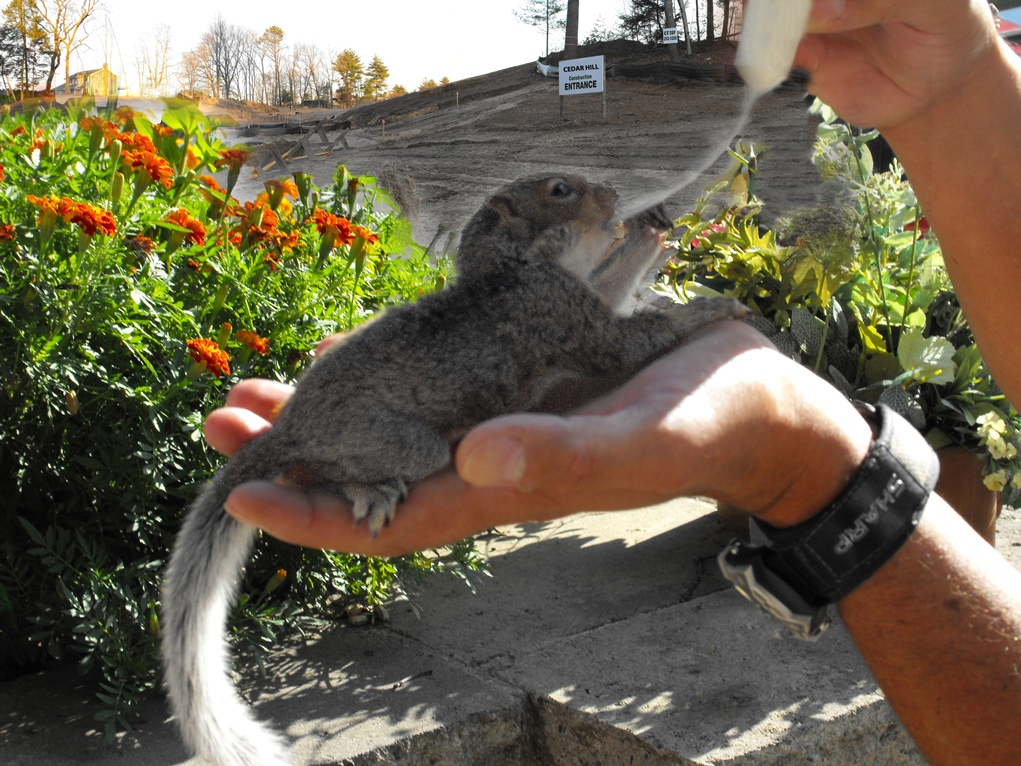 Be Prepared to Rescue Displaced Wildlife When Construction Gets Underway on Cedar Mountain